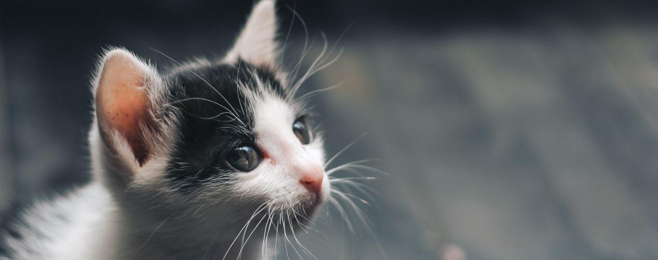 Заметили перед отжимом: Котенок выжил после получасовой стирки в машинке