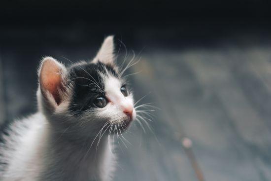 Зоозахисники чекають на киян, які б розібрали врятованих із біди котиків