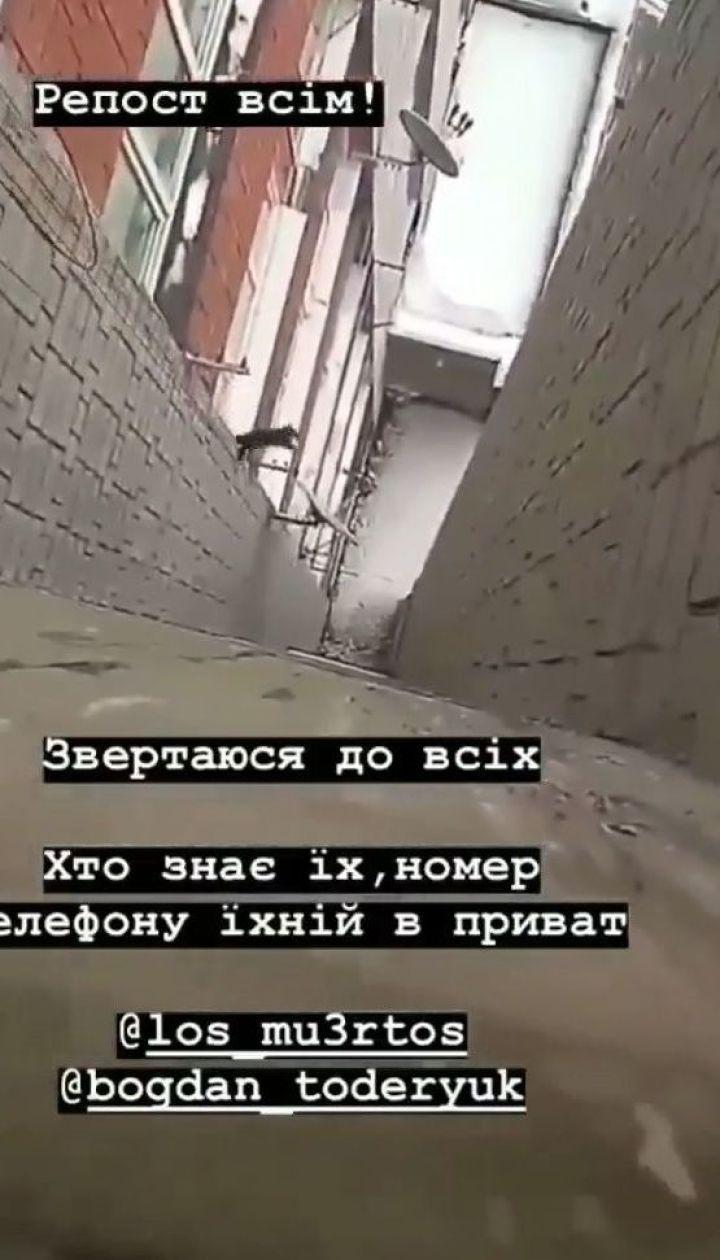 У Львові двоє підлітків жбурнули кошеня з багатоповерхівки