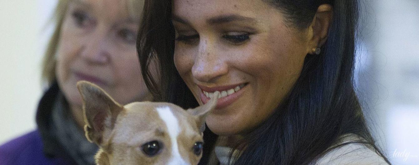 Ефект Меган: пес, якого взяла на руки герцогиня Сасекська, знайшов новий будинок в лічені дні