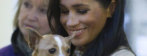 Эффект Меган: пес, которого взяла на руки герцогиня Сасекская, нашел новый дом в считанные дни