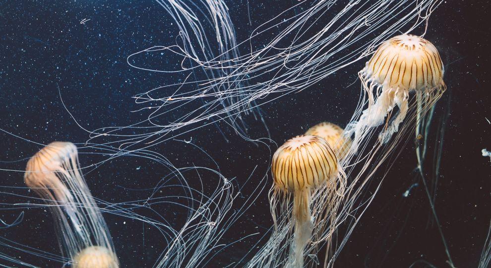ТСН Stories. Магнетичні та небезпечні: цікаві факти про медуз