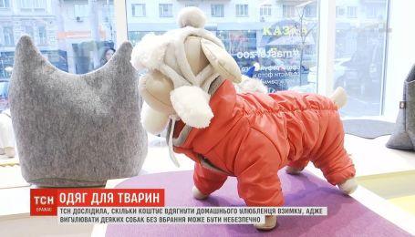 Одежда для животных: сколько стоит одеть домашнего любимца зимой