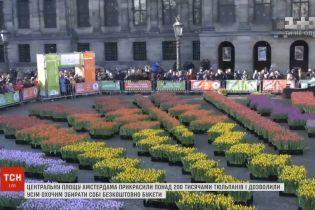 Центральную площадь Амстердама украсили более 200 тысячами тюльпанов