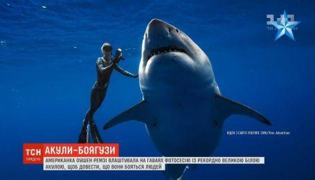 Міст самогубців, розсекречені документи про інопланетян та дружба з акулою: новини з онлайн-трансляції