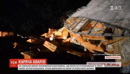 Вместо бойни - на волю: фура с тысячами кур перекинулась на Николаевщине