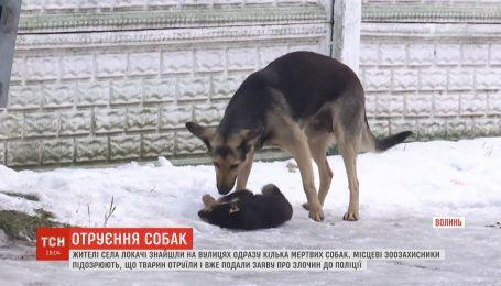 Люди обвиняют поселковую власть в массовом отравлении бездомных собак