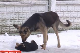 В поселке на Волыни массово потравили собак, в том числе маленького щенка