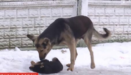 Собак в Николаеве атакует смертоносный паразит, который передается человеку