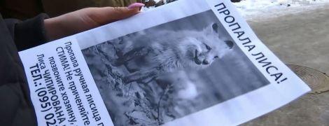 В Ірпені шукають лисичку, відому за скандалом у супермаркеті