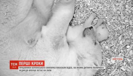 Працівники берлінського зоопарку показали перші кроки дитинчати полярного ведмедя