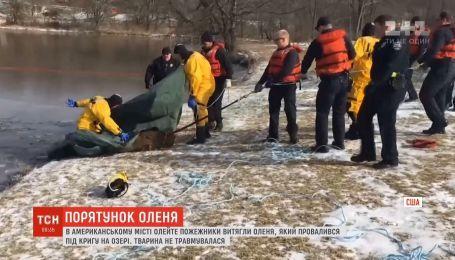 В США спасатели вытащили оленя, который провалился под лед на озере