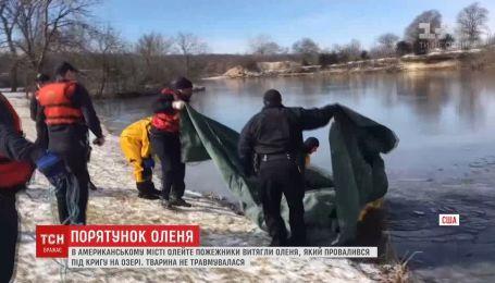 Пожарные помогли маленькому оленю выбраться из ледяного озера