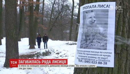 На Киевщине домашняя лиса убежала из дома