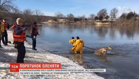 Спасение оленя: пожарные вытащили животное, которое провалилось под лед на озере