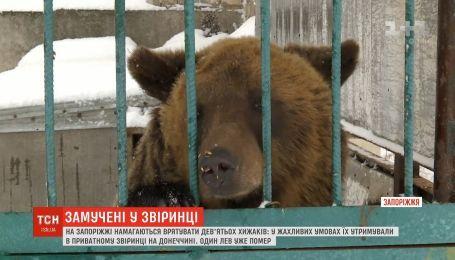 Замученные голодом: в Запорожской области пытаются спасти 9 хищников, которых забрали из частного зверинца