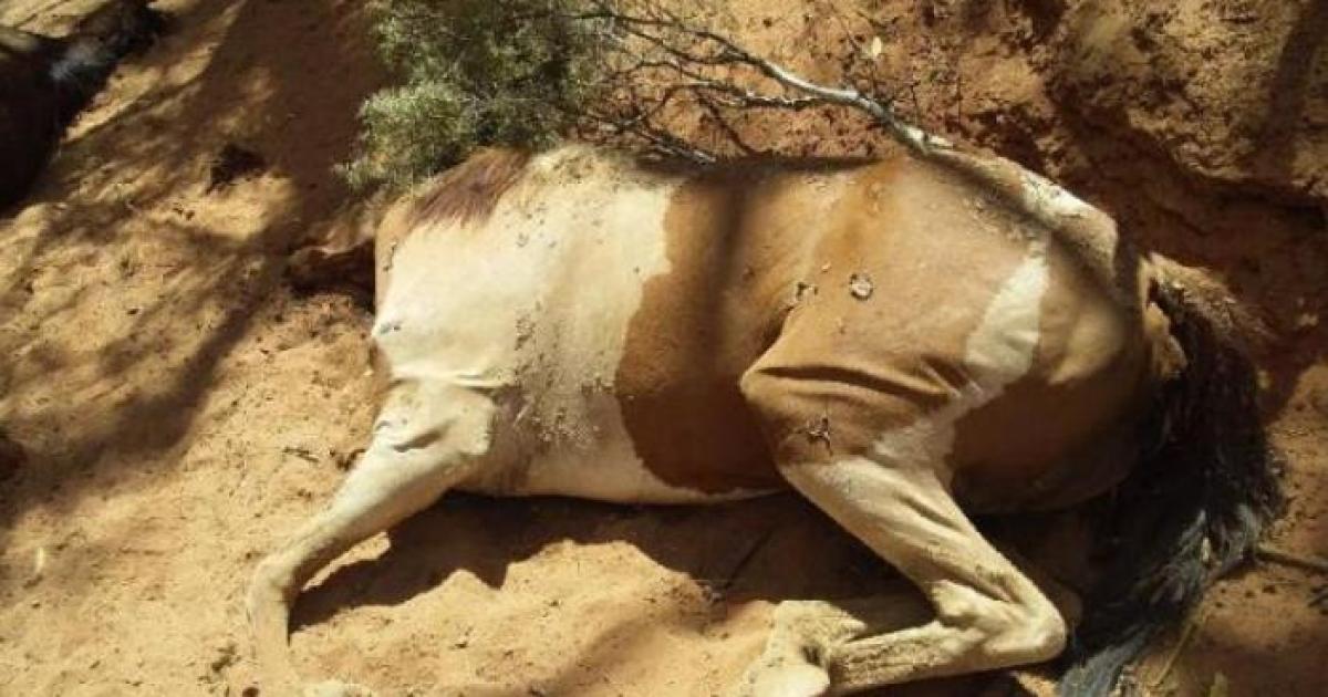 Дикі коні померли від спраги та спеки @ Facebook/Ralph Turner