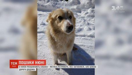Киевлянка разыскивает своего метиса ретвивера, который не захотел жить с новыми хозяевами