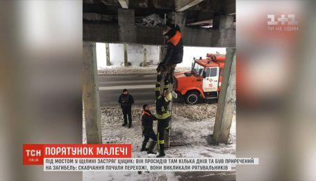 В Кривом Роге щенок застрял в опорах моста
