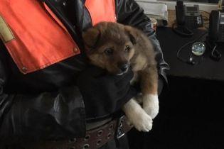 Спасатели Днепропетровщины оставили себе щенка, которого вытащили из опоры моста