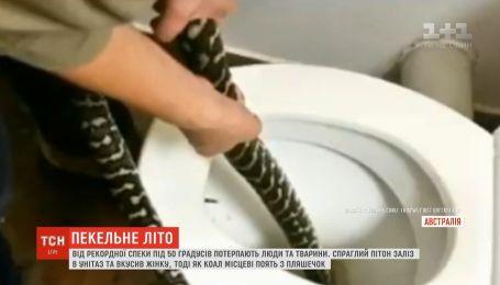 В Австралії пітон заліз до туалету і вкусив жінку за сідниці