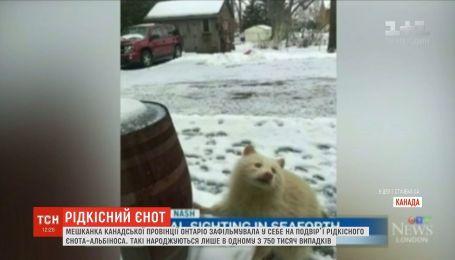 Жительница Канады засняла редкого енота-альбиноса
