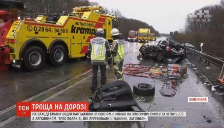В Германии водитель грузовика со свиньями выехал на встречную полосу и столкнулся с легковушкой