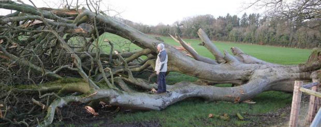 """В Ірландії 200-річне дерево з """"Гри престолів"""" зніс потужний ураган"""