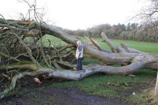 """В Ирландии 200-летнее дерево из """"Игры престолов"""" снес мощный ураган"""