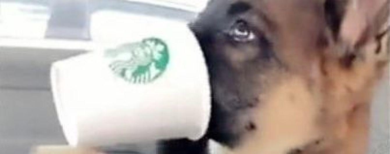 Ранок починається із кави. Мережу замилували собаки, які насолоджуються збитими вершками
