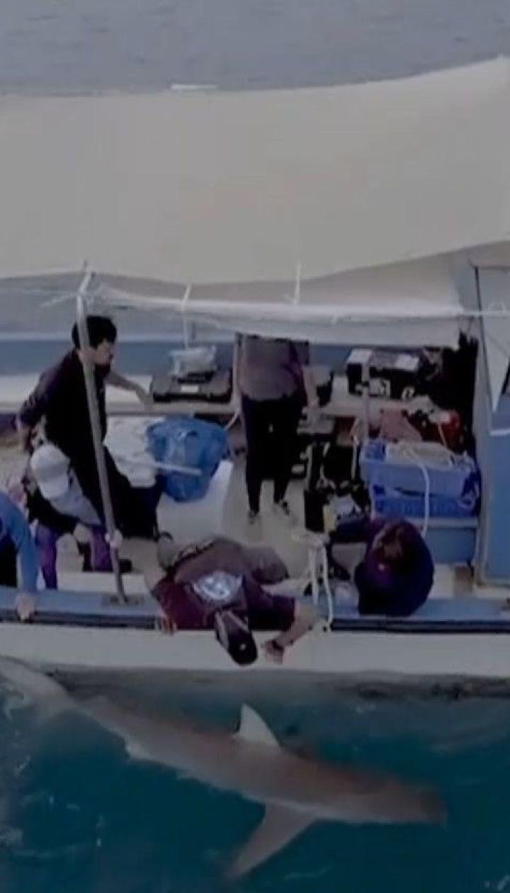 Ученые выясняют, что влечет стаи акул к прибрежного города Хадера