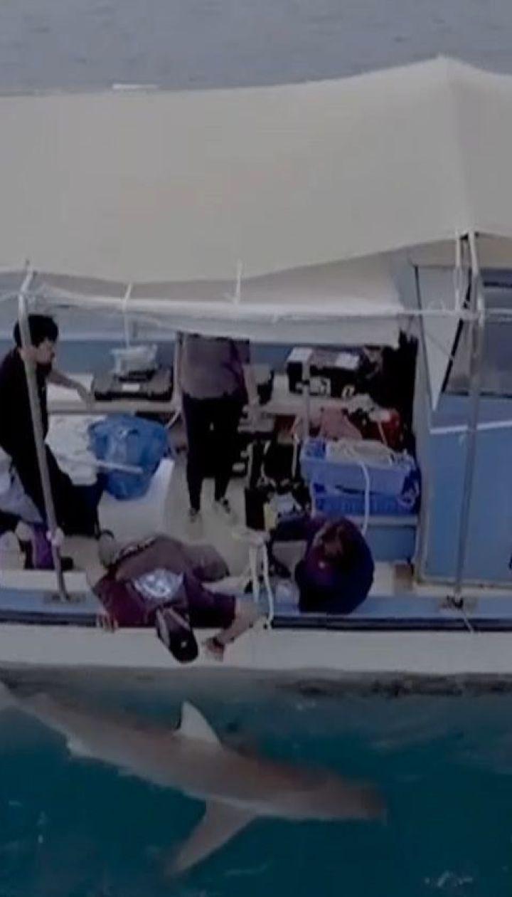 Науковці з'ясовують, що вабить зграї акул до прибережного міста Хадера