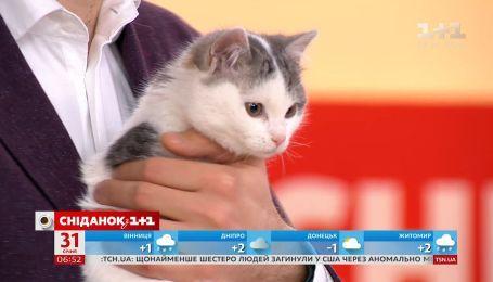 Котики Пуша та Мілк шукають господарів