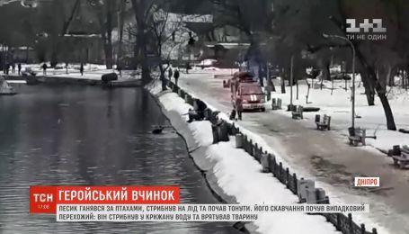 В городском парке Днепра мужчина бросился в озеро, чтобы спасти собаку