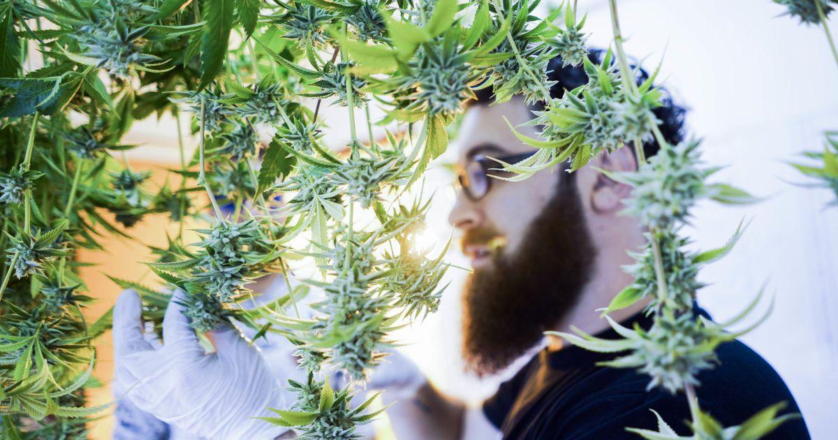 Супрун поддержала легализацию медицинской марихуаны и объяснила ее лечебный эффект