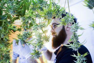Супрун підтримала легалізацію медичної марихуани та пояснила її лікувальний ефект