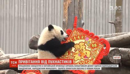 В Китае работники зверинца устроили пандам впечатляющий дебют