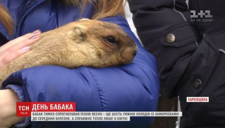 Харьковской вещун сурок Тимка спрогнозировал позднюю весну