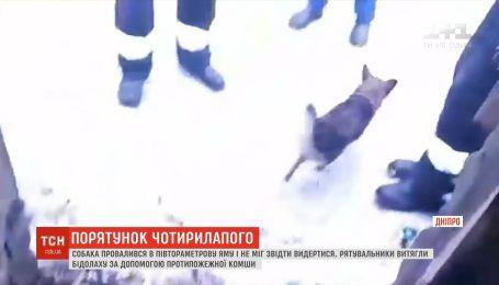 У Дніпрі рятувальники витягнули собаку, який провалився у півтораметрову яму