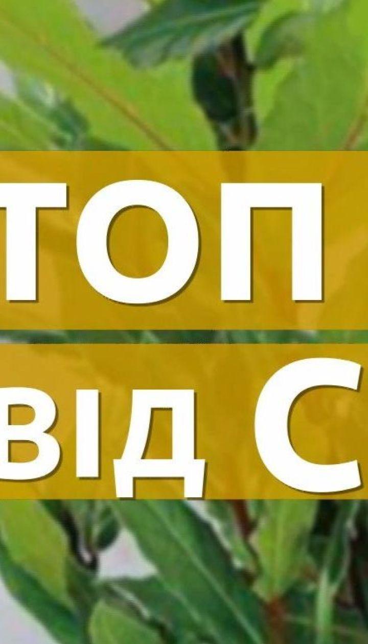 ТОП-5 комнатных растений для очистки воздуха в квартире