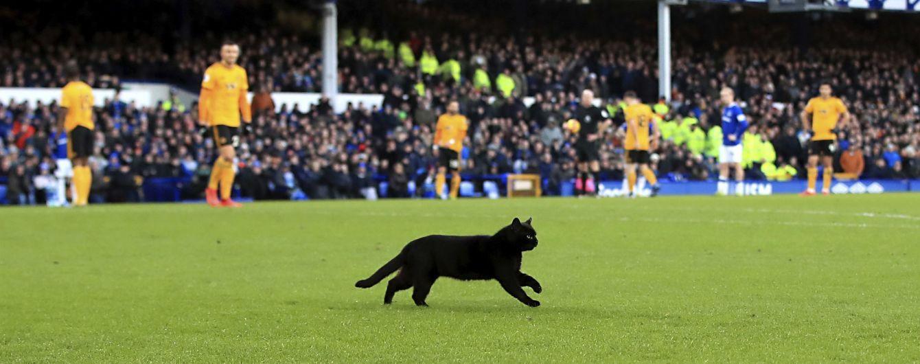 Черный кот прервал футбольный матч в Англии и стал героем забавных мемов