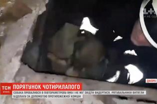 В Днепре спасатели достали собаку из-под земли