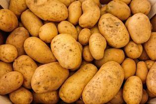В останній місяць зими картопля почала дешевшати