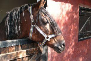 В Одессе полицейские поймали коня, который сбежал с ипподрома и носился по улицам