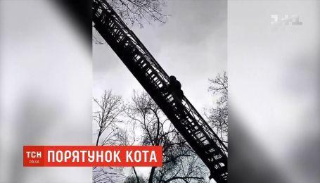 У Дніпрі рятувальникам, аби зняти кота з дерева знадобилася автодрабина