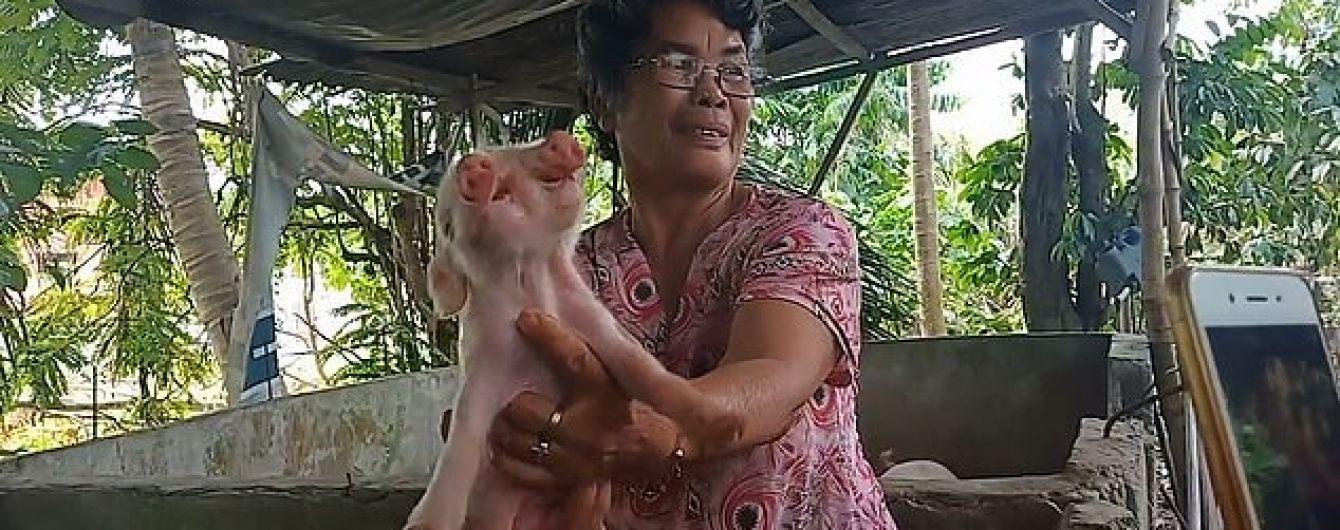 Два носи і три ока: філіппінців шокувало дивне новонароджене порося