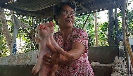 Два носа и три глаза: филиппинцев шокировал странный новорожденный поросенок