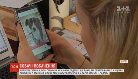 В Литве создали мобильное приложение для поиска домашнего любимца из приюта