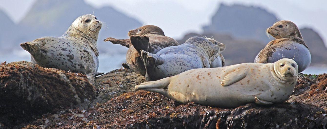 Новозеландська біологиня виявила флешку у фекаліях тюленя і шукає її власників у всьому світі