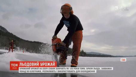 В США на озере Сквам собирают традиционный ледяной урожай